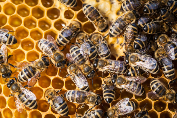 foto van een bijenkorf